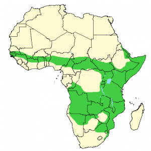 Banded Mongoose - Mungos mungo - Distribution Map