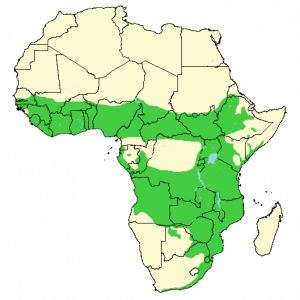 Bushbuck - Tragelaphus scriptus - Distribution map