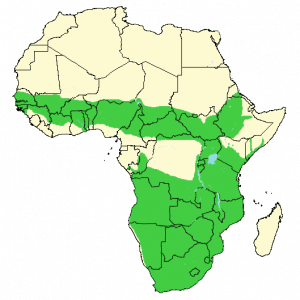 Common duiker - Sylvicapra grimmia - Distribution map
