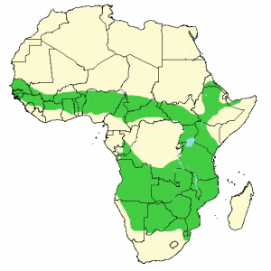 Warthog - Phacochoerus africanus - Distribution map