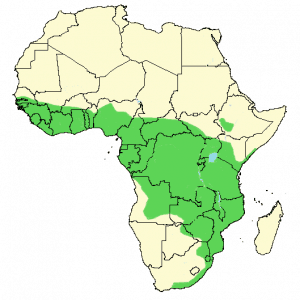 African Cuckoo-Hawk - Aviceda cuculoides - Distribution Map