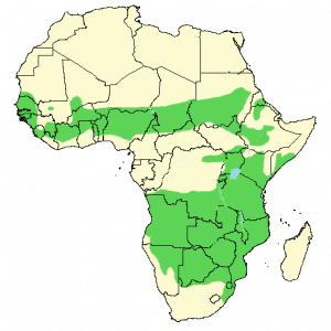 Brown Snake Eagle - Circaetus cinereus - Distribution Map