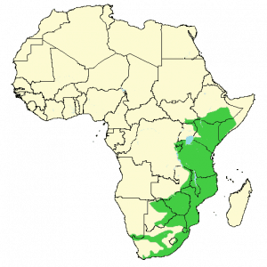 Vervet Monkey - Chlorocebus pygerythrus - Distribution map