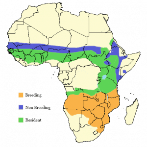 Wahlberg's Eagle - Hieraaetus wahlbergi - Distribution Map