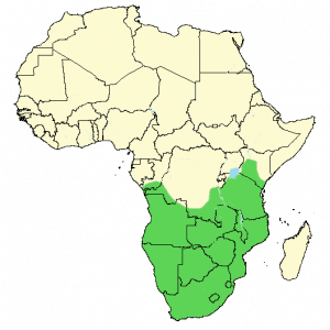 African Hoopoe - Upupa africana - Distribution Map