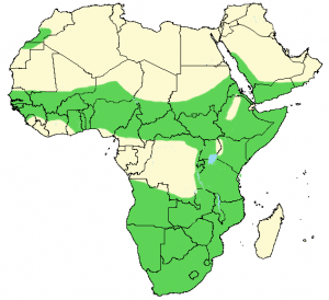 Puff Adder - Bitis arietans - Distribution Map