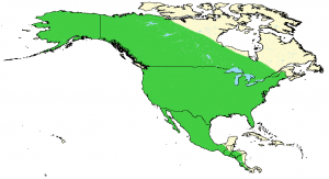 Coyote - Canis latrans - Distribution Map