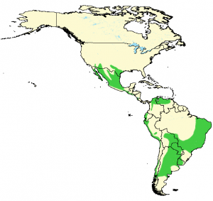 Harris's Hawk - Parabuteo unicinctus - Distribution Map