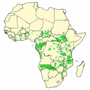 African Elephant - Loxodonta africana - Distribution map