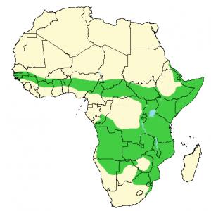 Banded Mongoose - Mungos mungo - Distribution Map