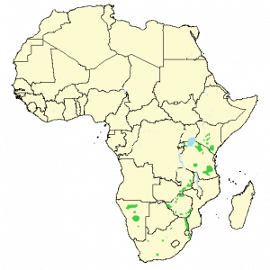 Black rhinoceros - Diceros bicornis - Distribution map