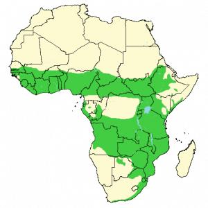 Bushbuck - Tragelaphus scriptus - Distribution map