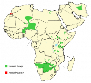 Cheetah - Acinonyx jubatus - Distribution Map