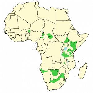 Giraffe - Giraffa camelopardalis - Distribution map