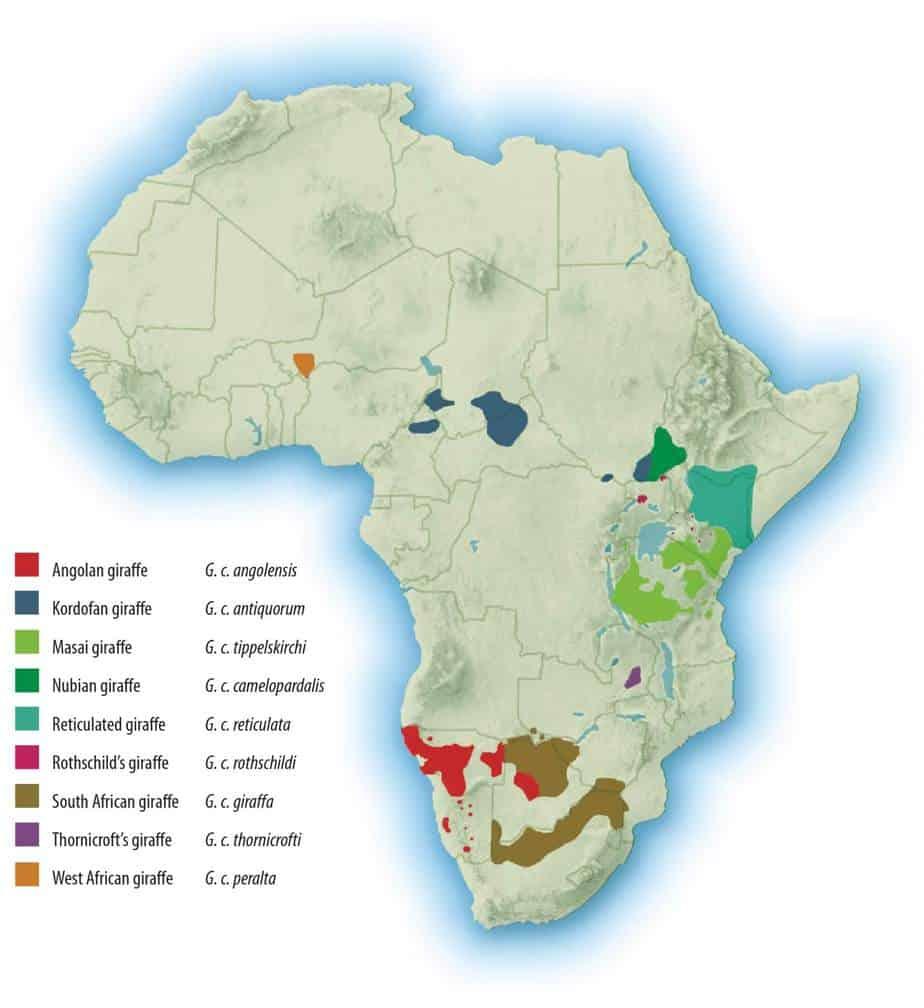 Giraffe Subspecies Distribution GCF - Southern Giraffe