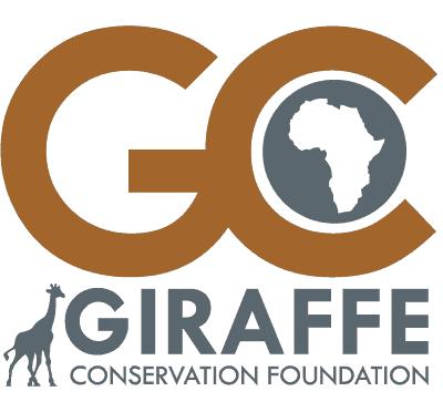Giraffeconservationfoundation - Sørlig Sjiraff