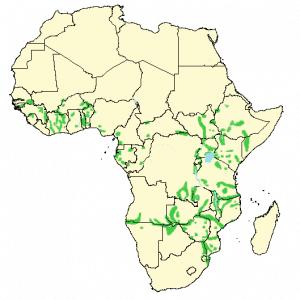 Hippopotamus - Hippopotamus amphibius - Distribution map