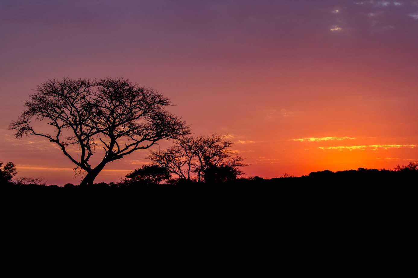 IMG 0305 - Tembe Elephant Park