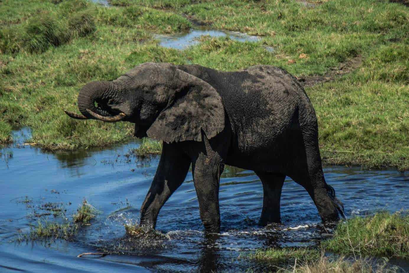 African Elephant5