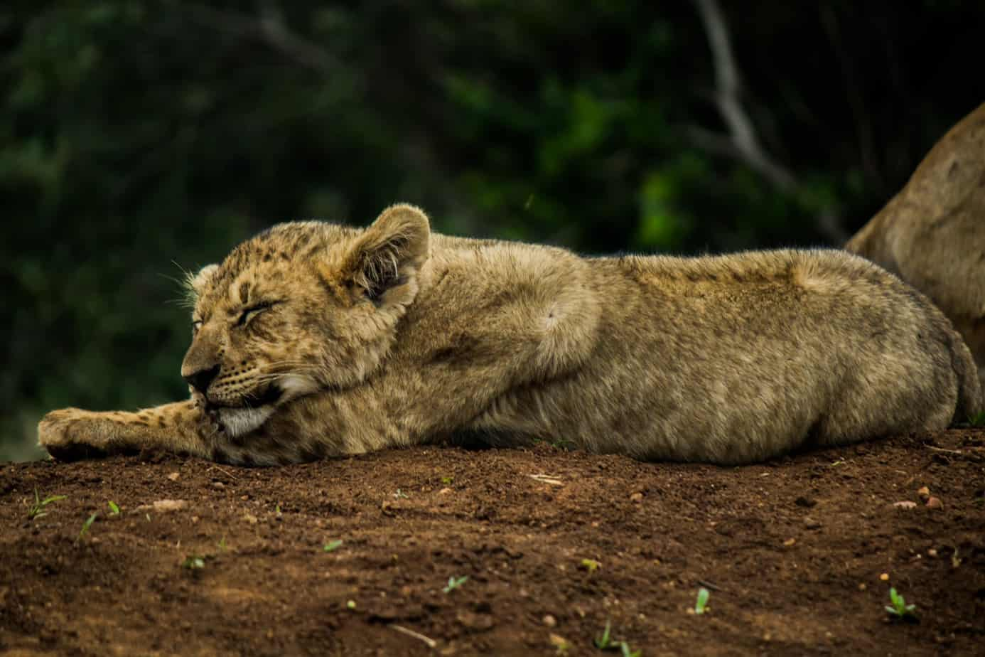 IMG 1155 - My African Top 5 - Photography Moments