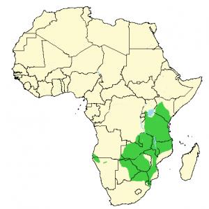 Impala - Aepyceros melampus - Distribution Map
