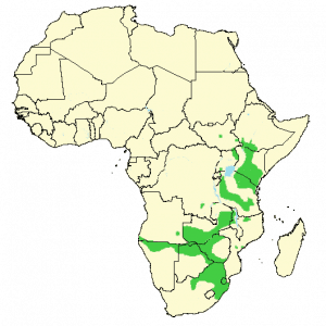 Plains Zebra - Equus quagga - Distribution map