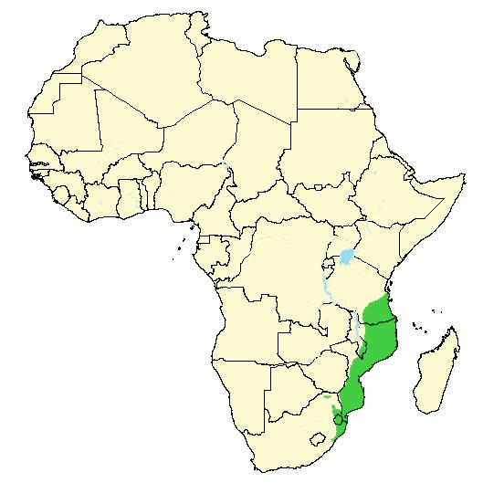 Hårete afrikanske