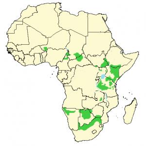 Sjiraff - Giraffa camelopardalis - Utbredelse