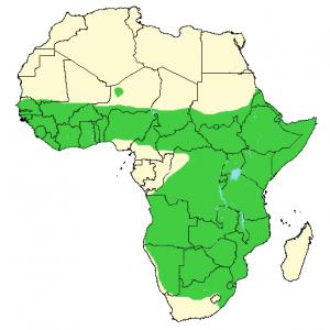 Slender Mongoose - Herpestes sanguineus - Distribution Map