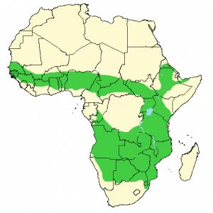 Warthog - Phacochoerus africanus - Distribution map