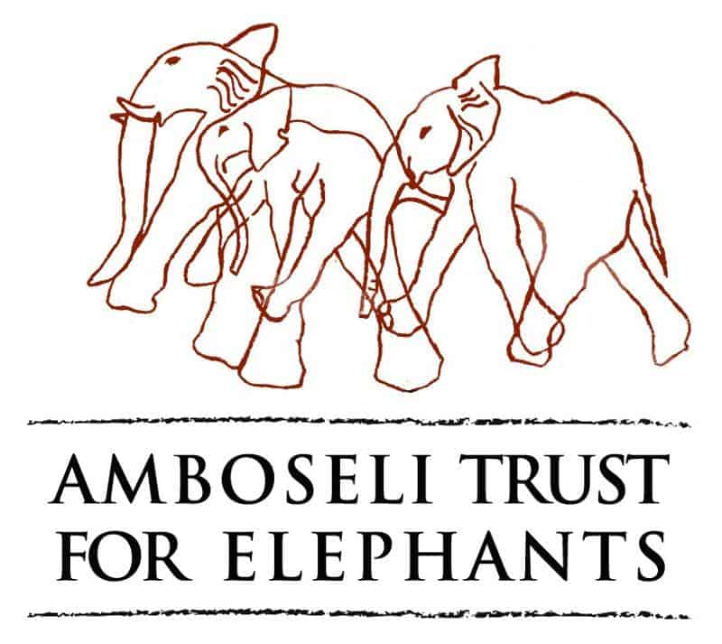 amboselitrustelephants 1 - Afrikansk Savanneelefant
