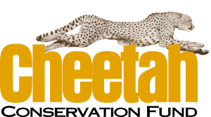 cheetah conservation fund 300x167 - Gepard