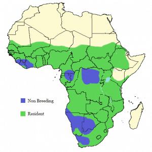 African Fish Eagle - Haliaeetus vocifer - Distribution Map