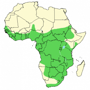 African Harrier-Hawk - Polyboroides typus - Distribution Map