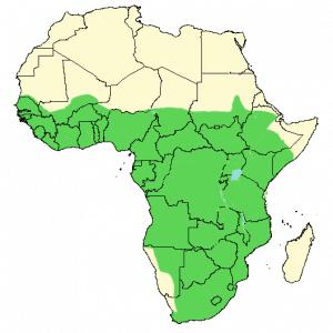 African Jacana - Actophilornis africanus - Distribution map