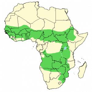 African Wattled Lapwing - Vanellus senegallus - Distribution map