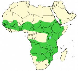 Bateleur - Terathopius ecaudatus - Distribution Map