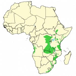 Blue Monkey - Cercopithecus mitis - Distribution map