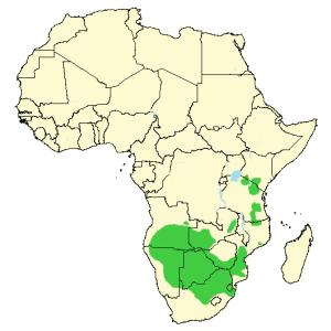 Blue Wildebeest - Connochaetes taurinus - Distribution map