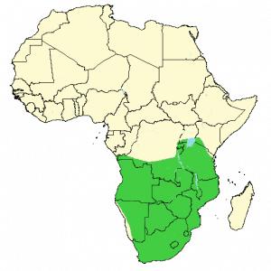 Cape Porcupine - Hystrix africaeaustralis - Distribution map