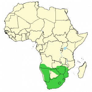Chacma Baboon - Papio ursinus - Distribution map