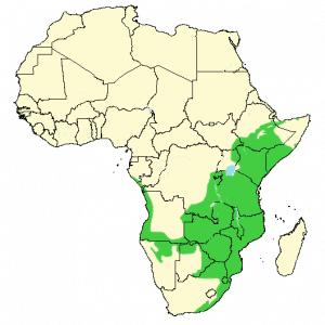 Emerald-Spotted Wood Dove - Turtur chalcospilos - Distribution map