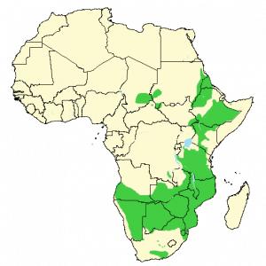 Greater kudu - Tragelaphus strepsiceros - Distribution map