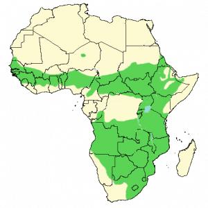 Helmeted Guineafowl - Numida meleagris - Distribution map