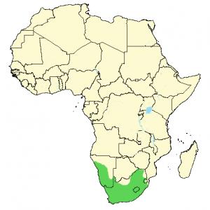 Jackal Buzzard - Buteo rufofuscus - Distribution Map