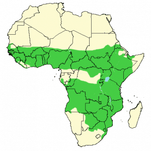 Little Bee-Eater - Merops pusillus - Distribution Map