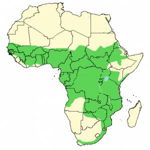 Long-Crested Eagle - Lophaetus occipitalis - Distribution Map