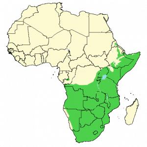 Ring-Necked Dove - Streptopelia capicola - Distribution map