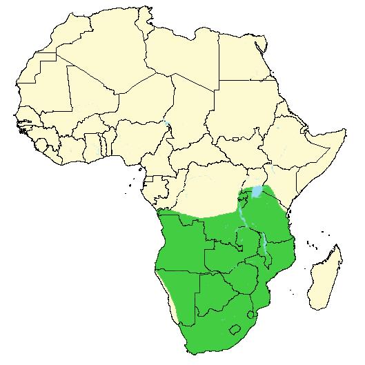 Afrika svart kjønn