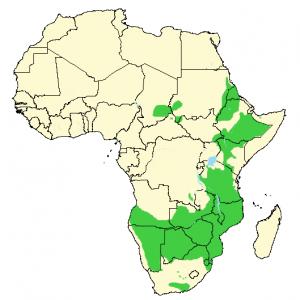 Stor Kudu - Tragelaphus strepsiceros - Utbredelse